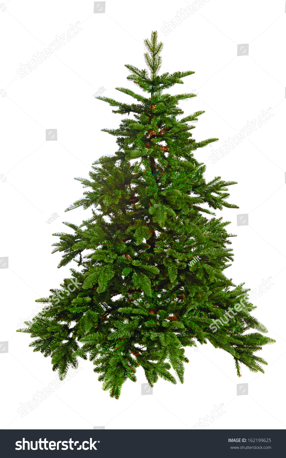 Stock Photo Bare Christmas Tree Isolated On White Background